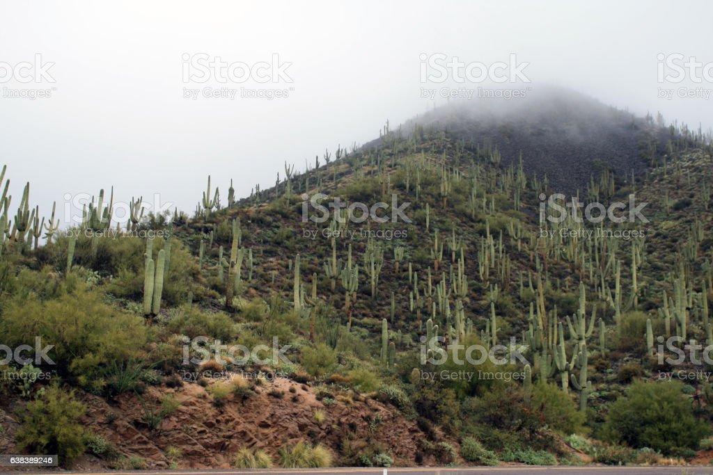 Arizona Cactus Covered Mountain in Fog stock photo