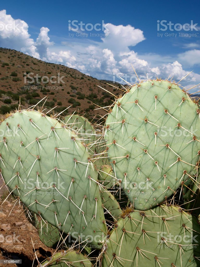 Arizona Cactus Detail royalty-free stock photo