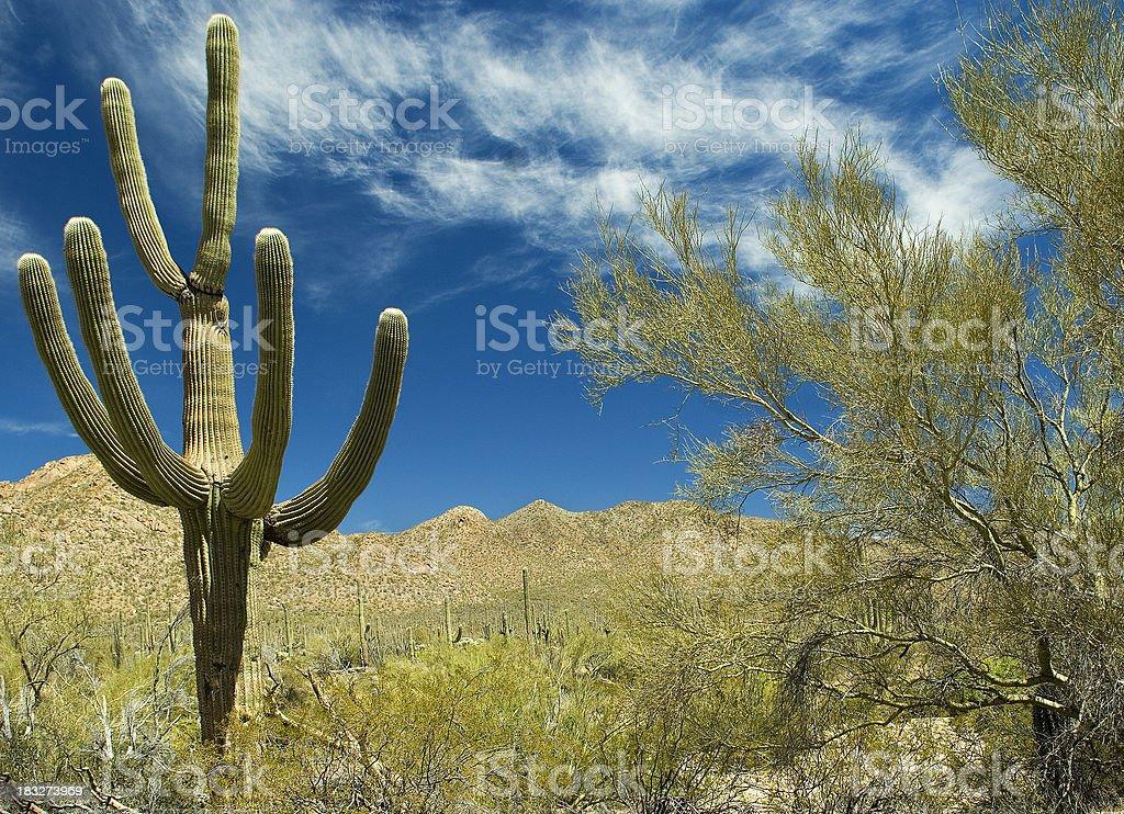Arizona Cactus & Mountains stock photo