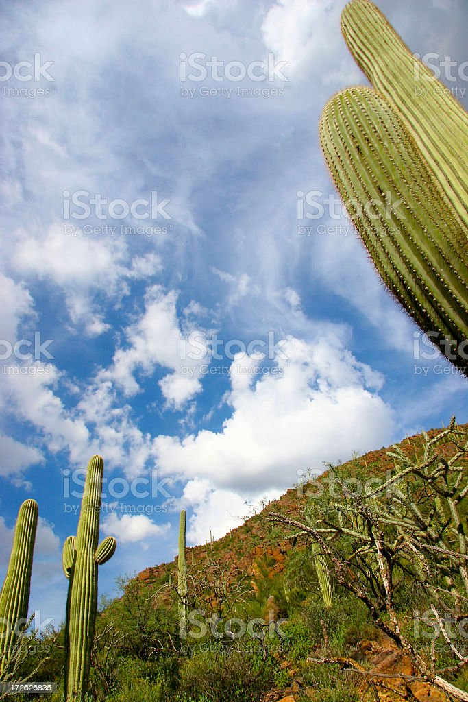 Arizona Clouds and Saguaro Sky royalty-free stock photo