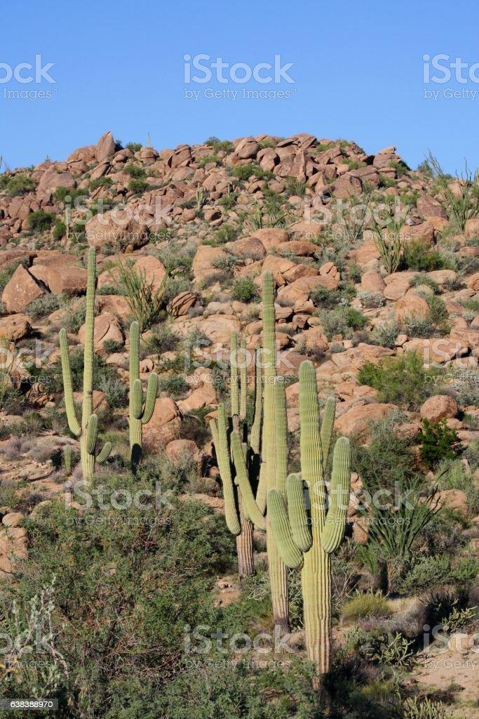 Arizona desert boulders hill with sahuaros cactus stock photo