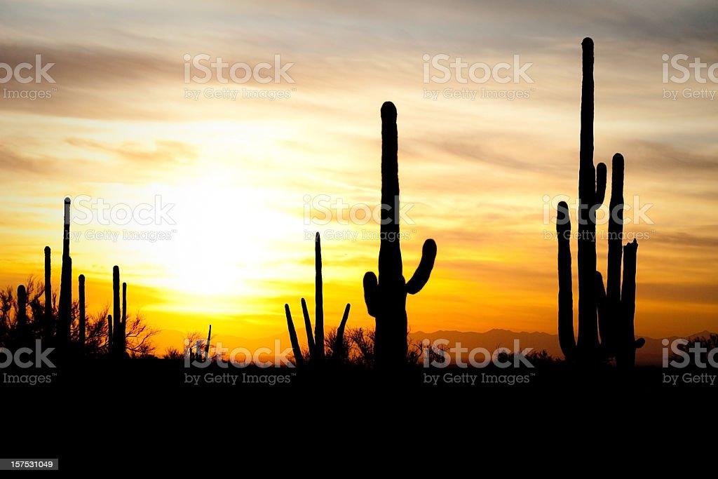 Arizona Desert Cactus Sagauro Sunset stock photo
