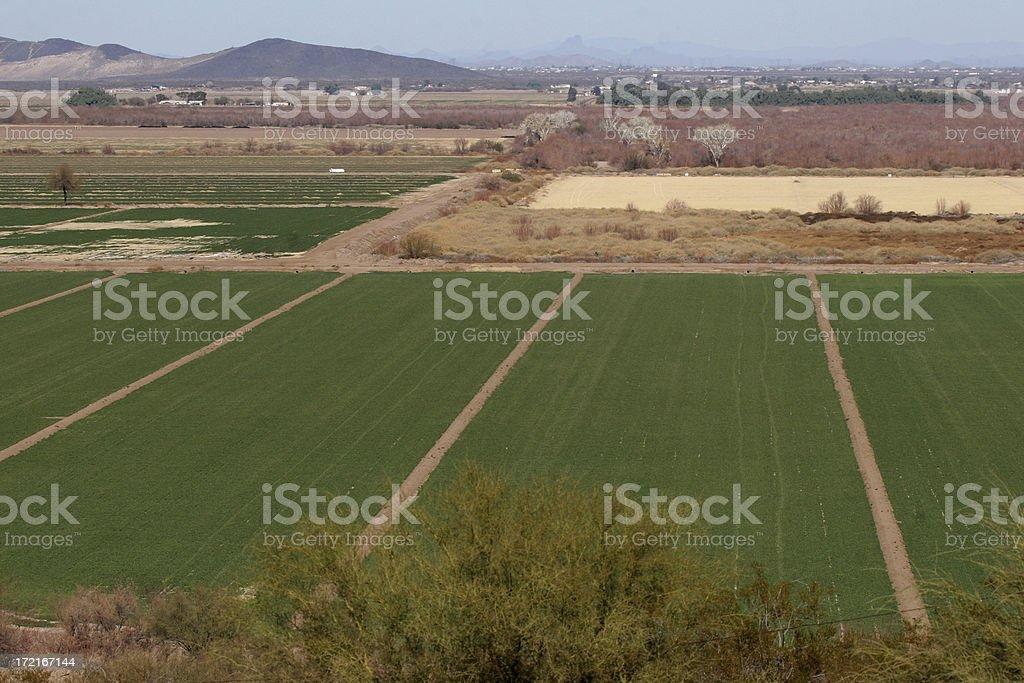arizona desert farm royalty-free stock photo