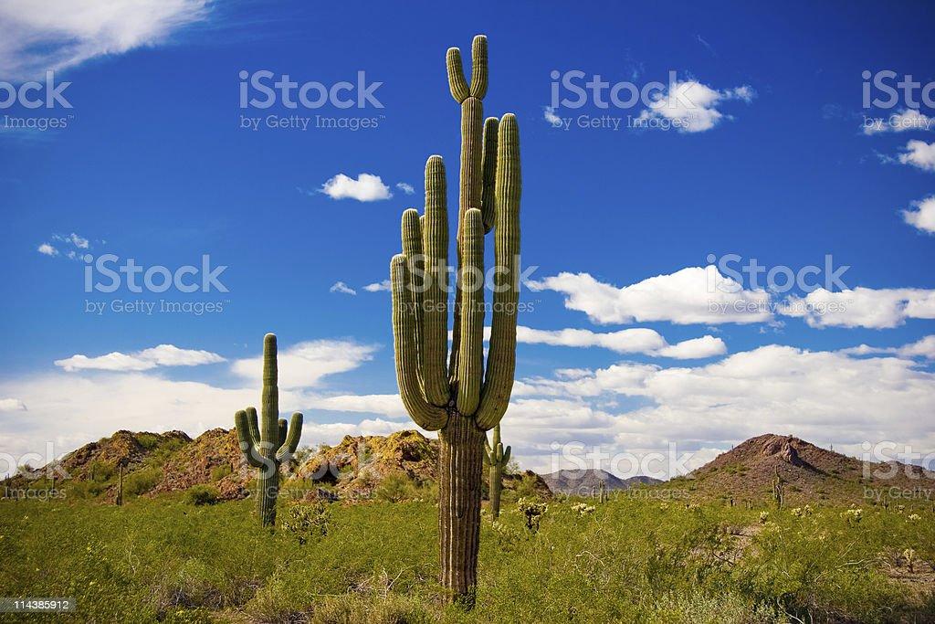 Arizona Desert Landscape royalty-free stock photo