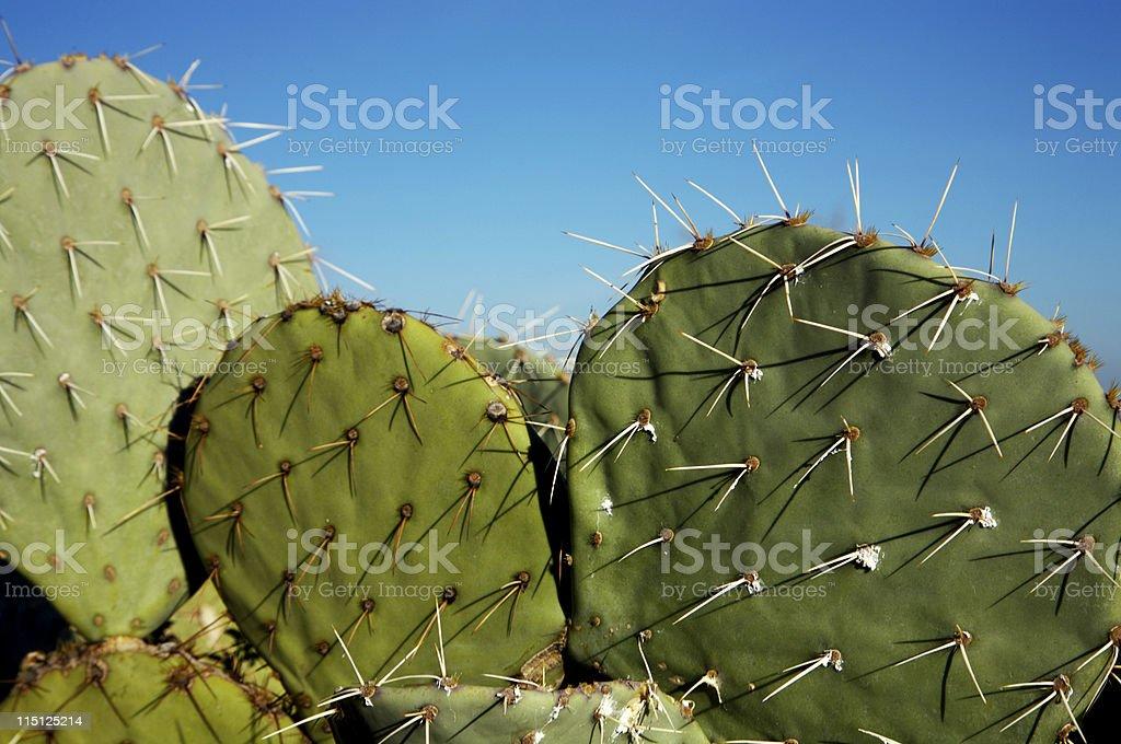 Arizona desert life Cactus stock photo