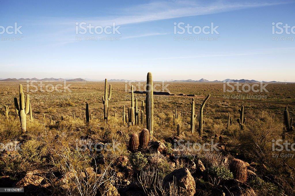 Arizona desert life royalty-free stock photo