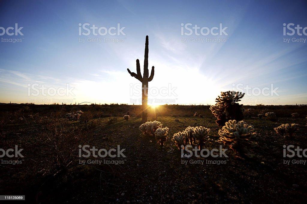 Arizona desert life stock photo