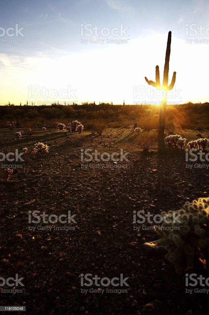 Arizona desert life Saguaro Cactus royalty-free stock photo