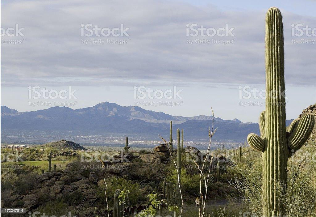 Arizona Desert - Spring Time royalty-free stock photo