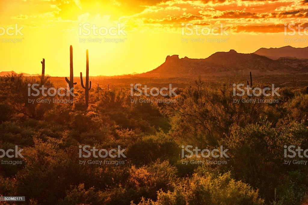 Arizona desert sunset with cacti and mountains stock photo