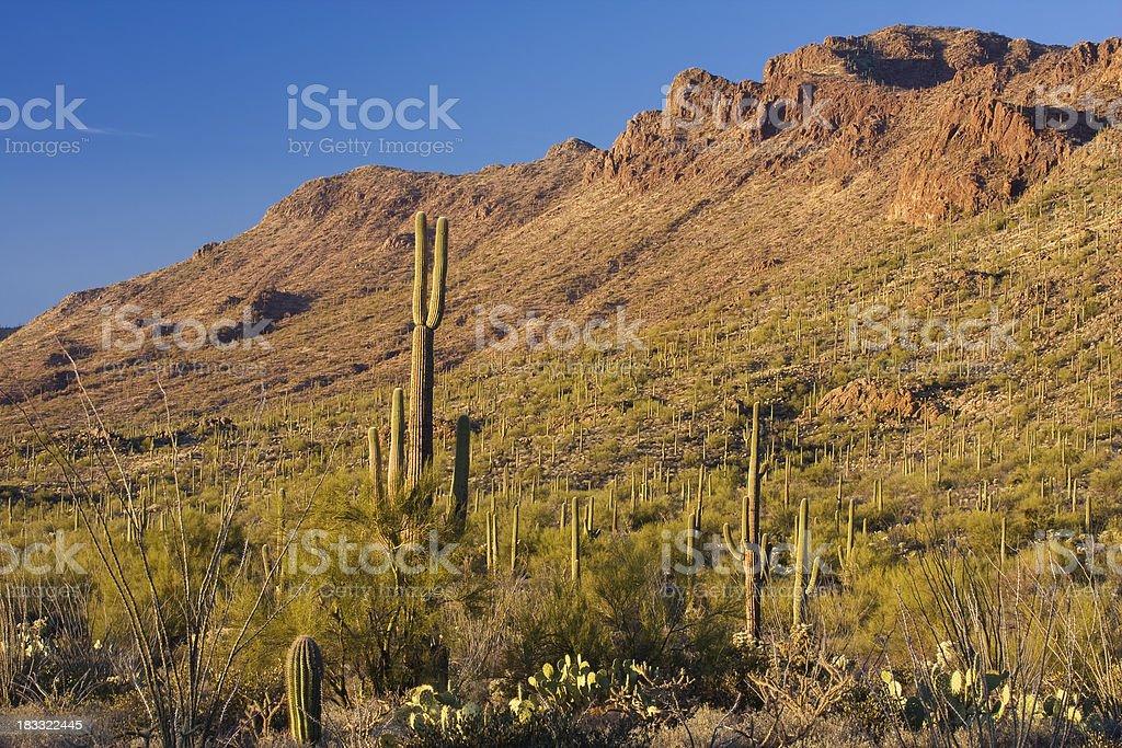Arizona Desert Vegetation on Hillside stock photo