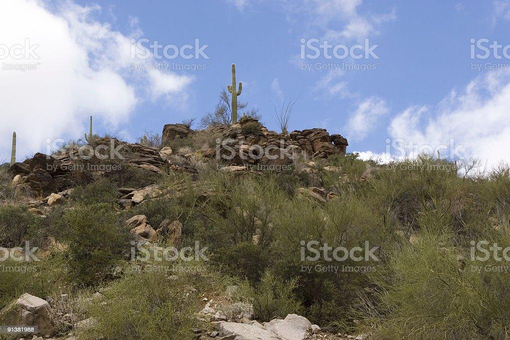 Arizona Saguaro Cactus on a Mountain Top royalty-free stock photo