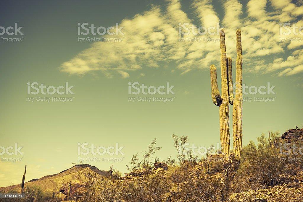 Arizona saguaro cactus stock photo