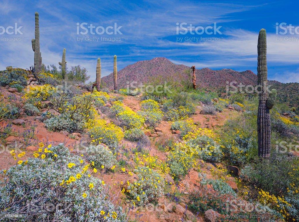 Arizona spring desert stock photo
