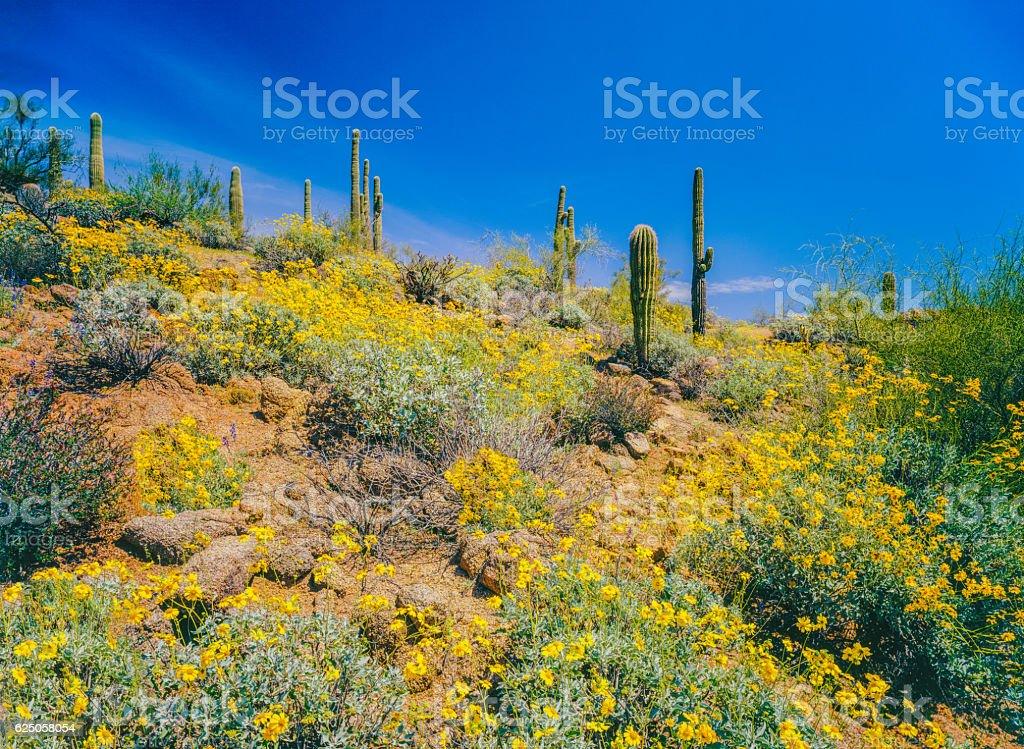 Arizona spring Superstition Mountain desert stock photo