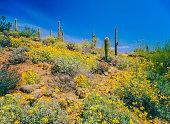 Arizona spring Superstition Mountain desert
