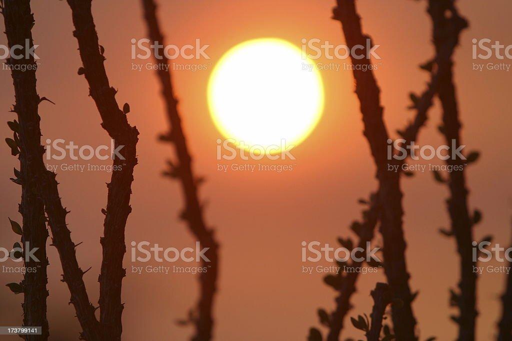Arizona Sunset royalty-free stock photo
