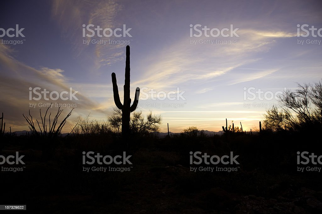 Arizona Sunset with Saguaro Cactus royalty-free stock photo