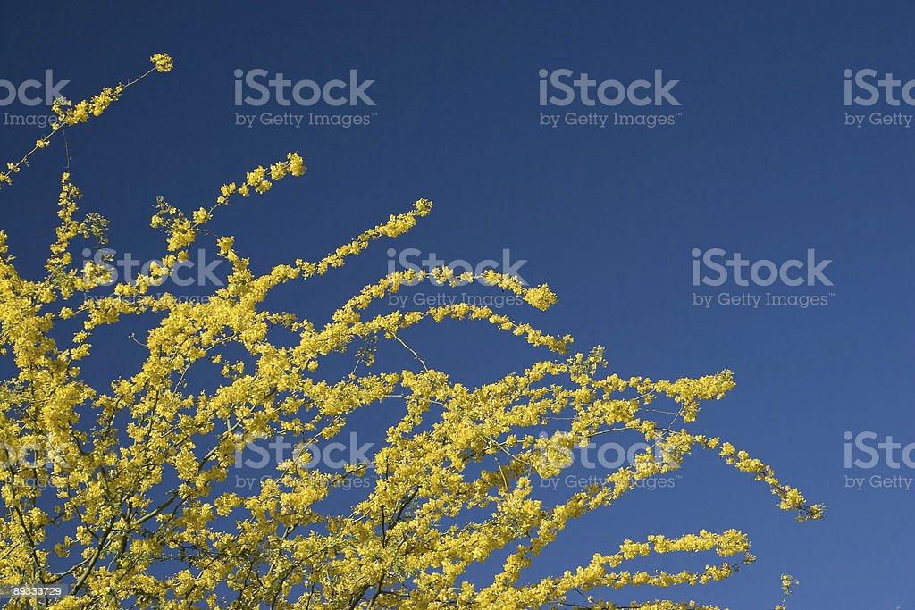 Arizona Yellow Blue royalty-free stock photo