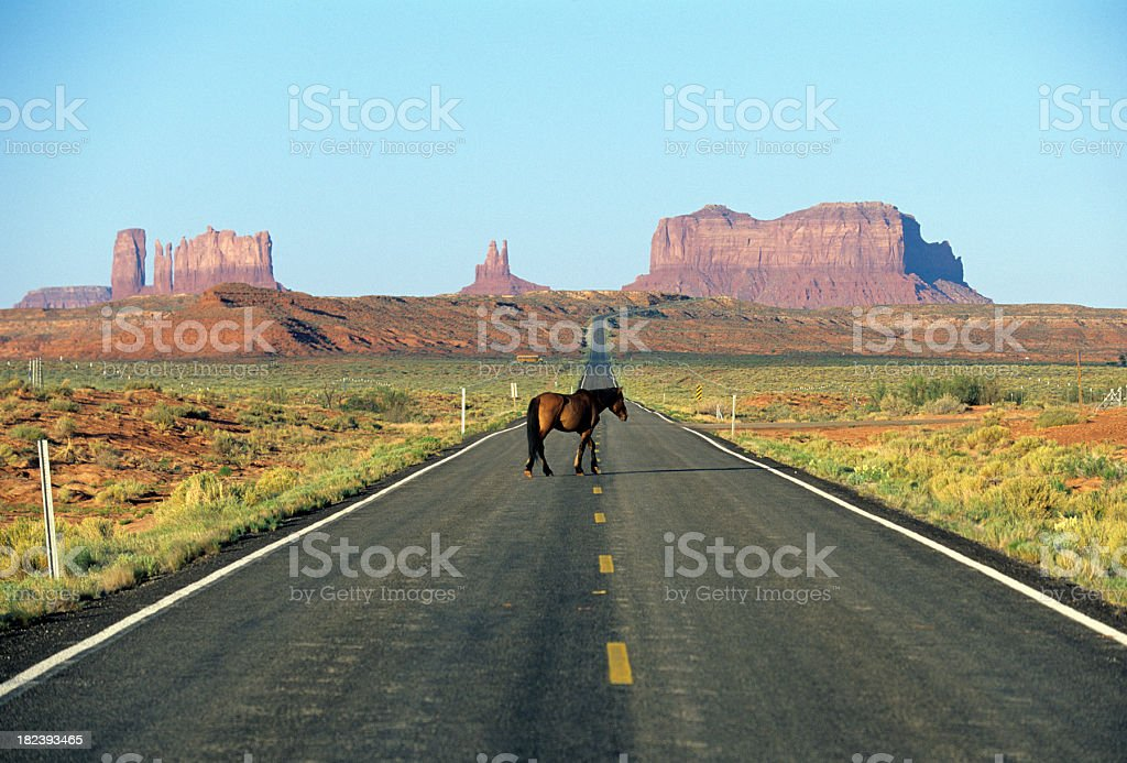Arizonan horse royalty-free stock photo
