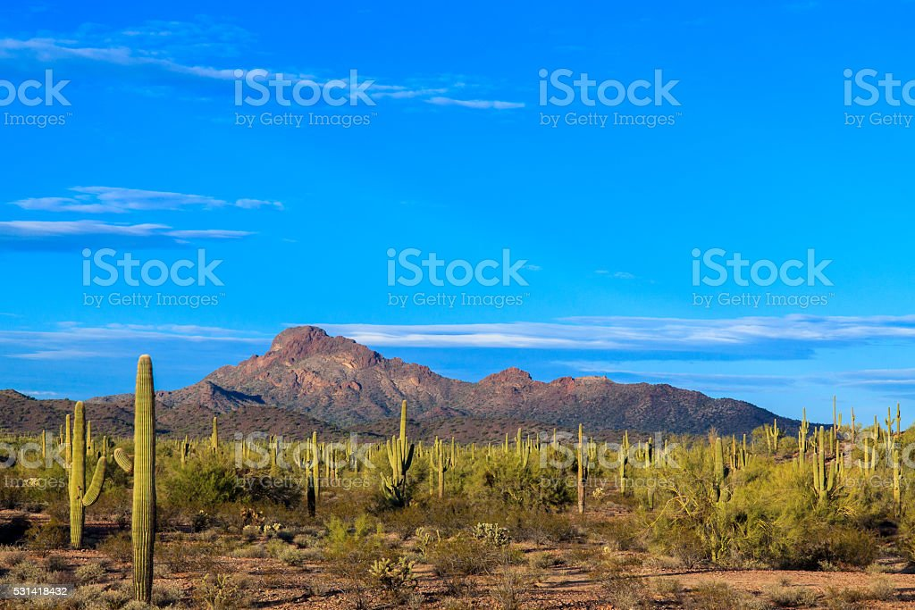 Arizona's Sonoran desert at dusk stock photo