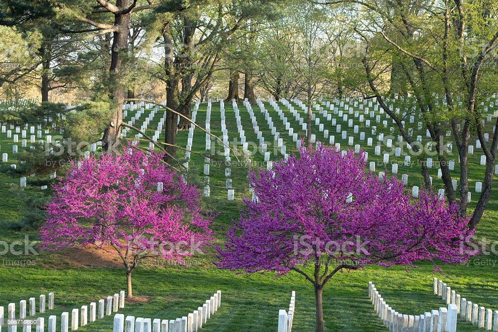 Arlington Cemetery in Spring stock photo