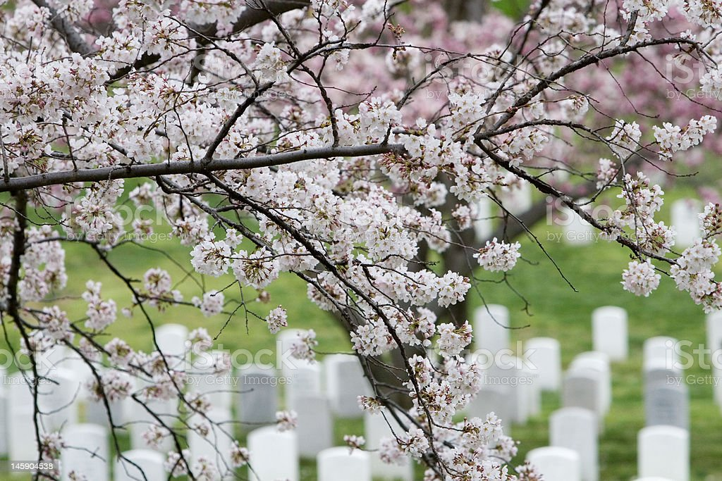 Arlington National Cemetery Blossoms royalty-free stock photo