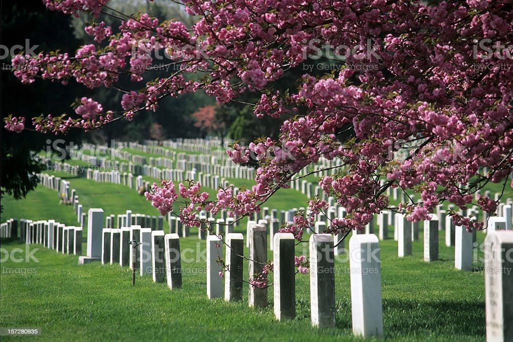 Arlington National Cemetery in Bloom stock photo