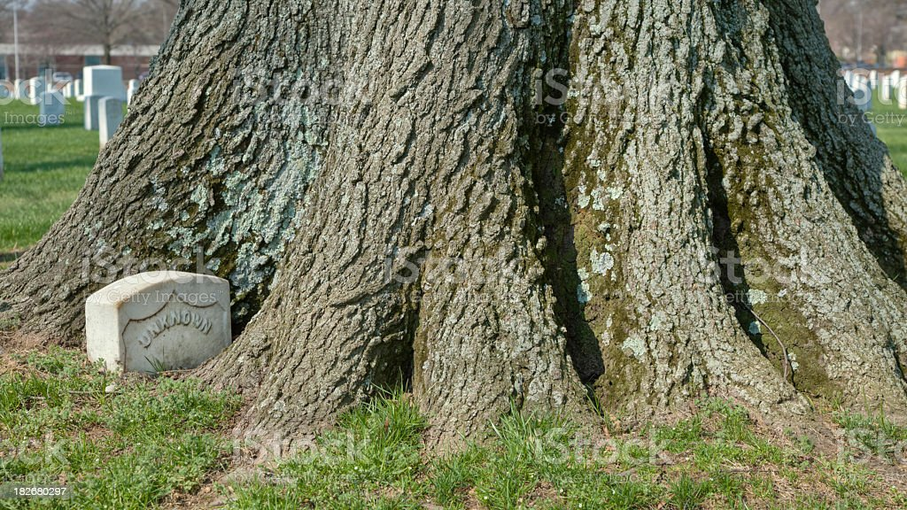 Arlington National Cemetery - Tree Engulfing Grave Marker royalty-free stock photo