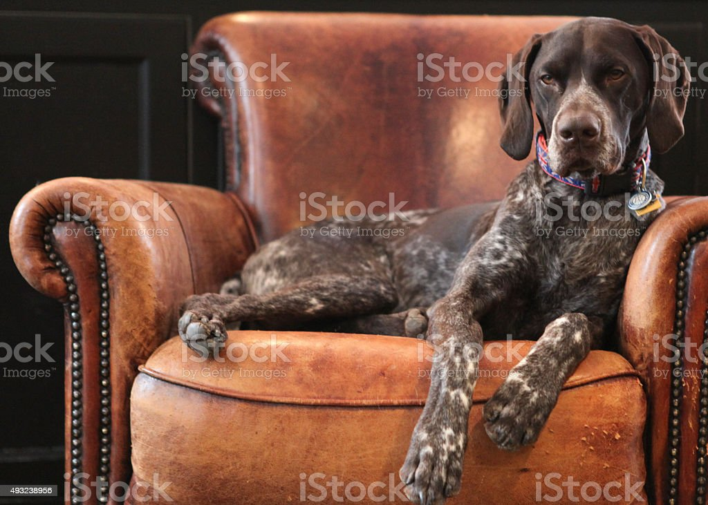 Armchair relax stock photo