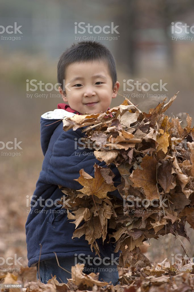 armful leaves royalty-free stock photo