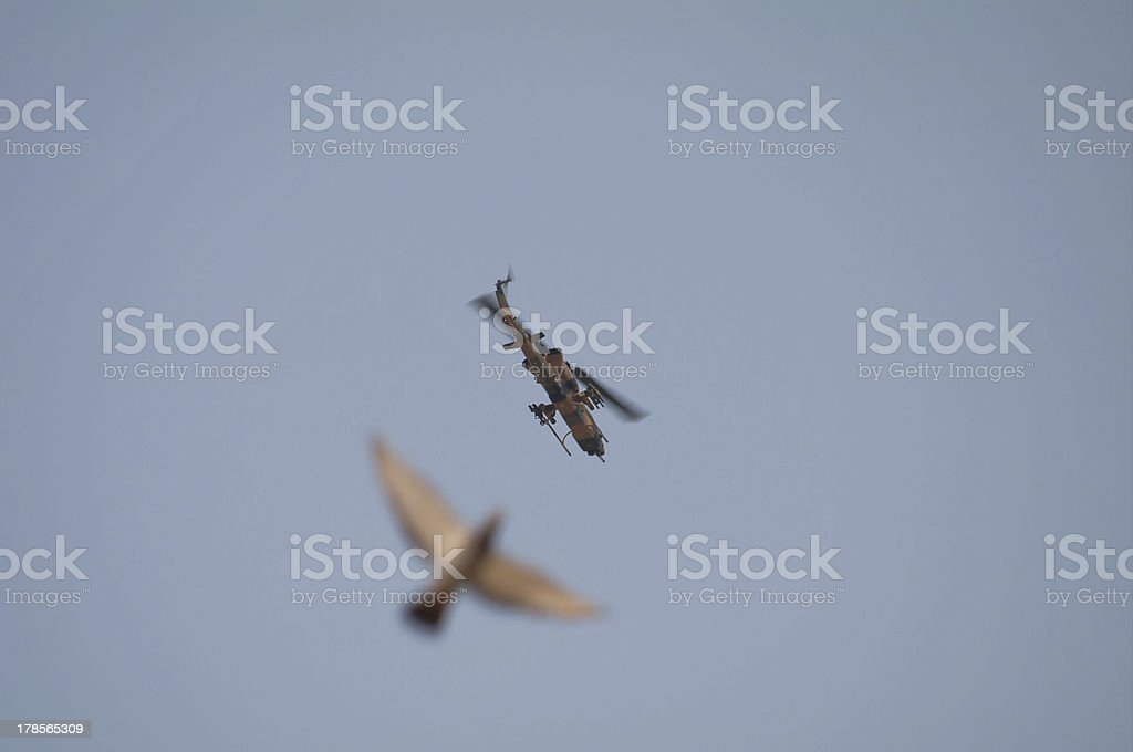 Army Helicopter and Pigeon stock photo
