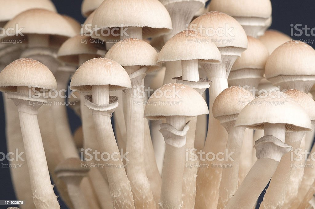army of shroom royalty-free stock photo