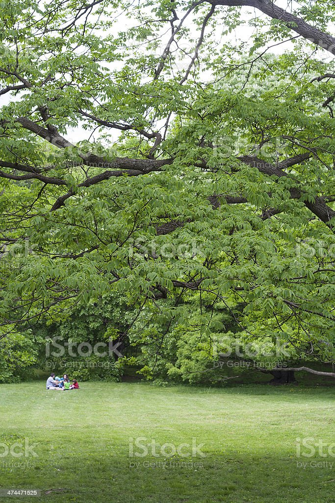 Arnold Arboretum stock photo