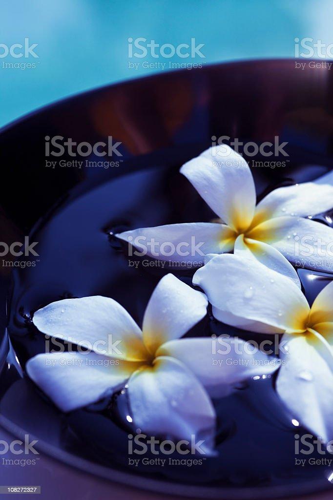 Aromatherapy Bowl royalty-free stock photo