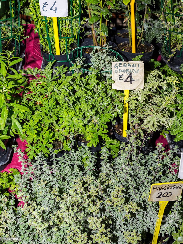 Aromatic and culinary herbs (Alba, Piedmont, Italy) stock photo