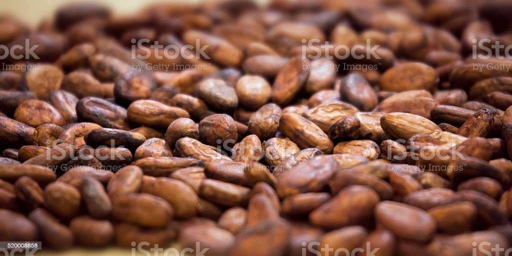 Aromatic cocoa beans  background stock photo