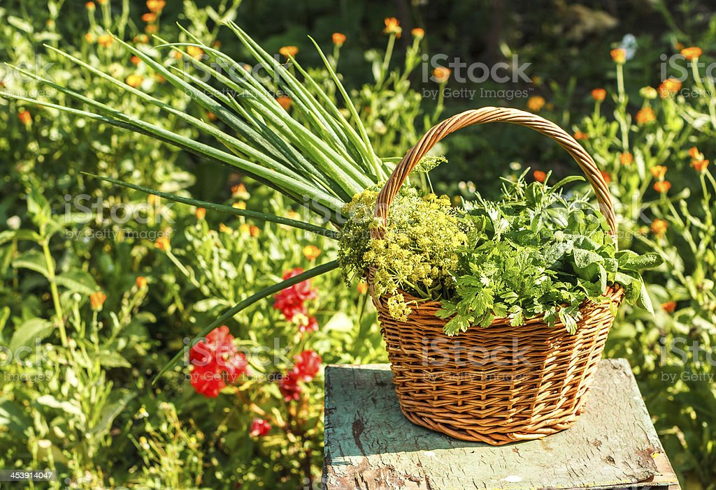 Aromatic herbs in a garden royalty-free stock photo
