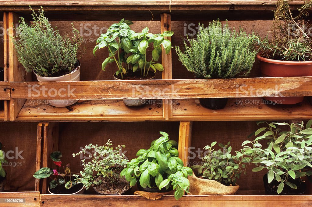 Aromatic herbs in their pots in rustic arrangement stock photo