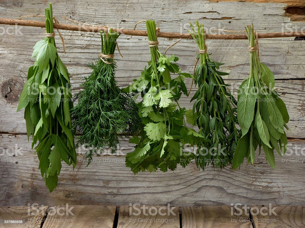 aromatic herbs lovage, dill, cilantro, hyssop, sage, stock photo