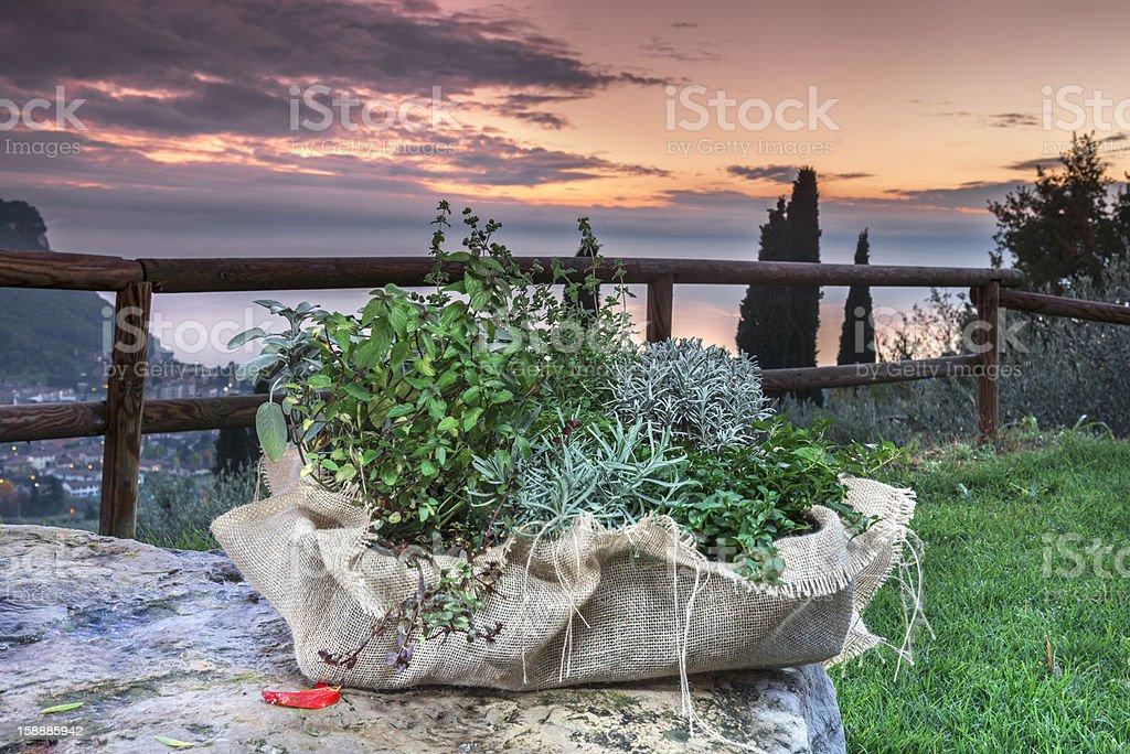 Aromatic plants stock photo