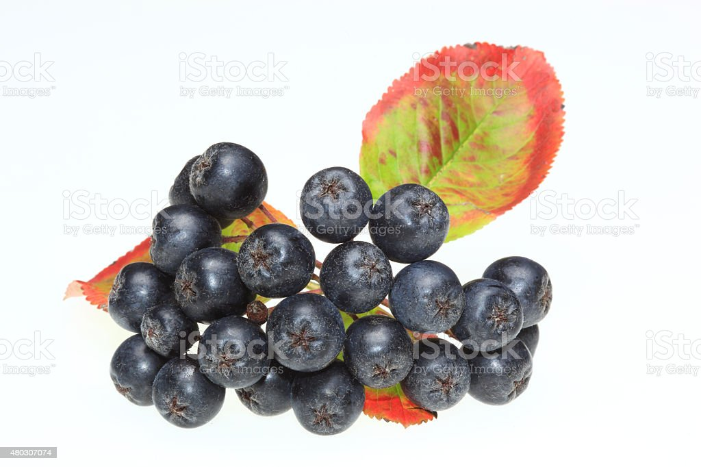 Aroniabeeren stock photo