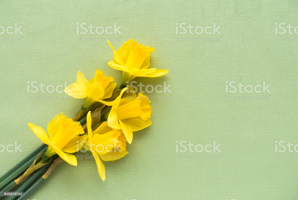 Arrangement of Daffodils on Green Background stock photo