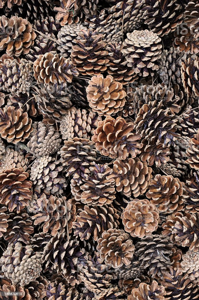 Arrangement of dried, fallen pine cones stock photo