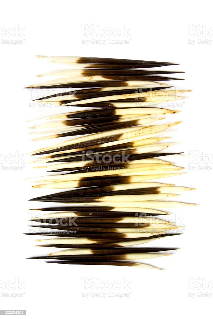 Arrangement of porcupine quills stock photo
