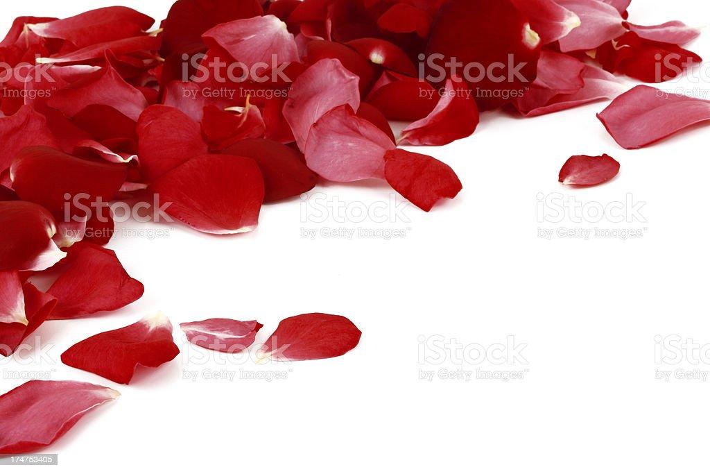 Arrangement of red rose petals for a romantic evening stock photo