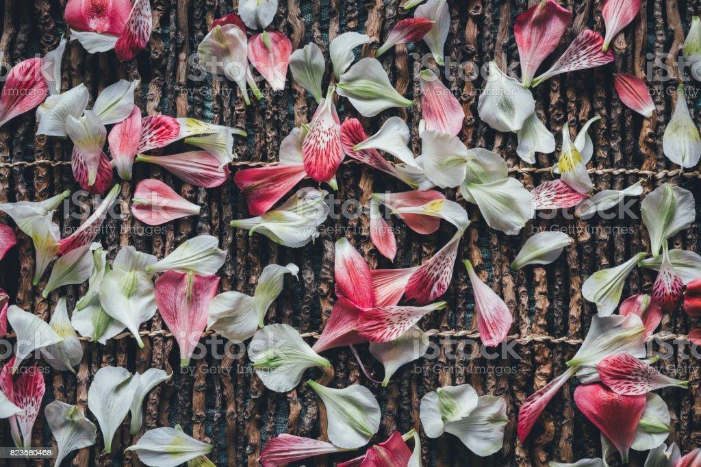 Arrangement With Colorful Petals stock photo