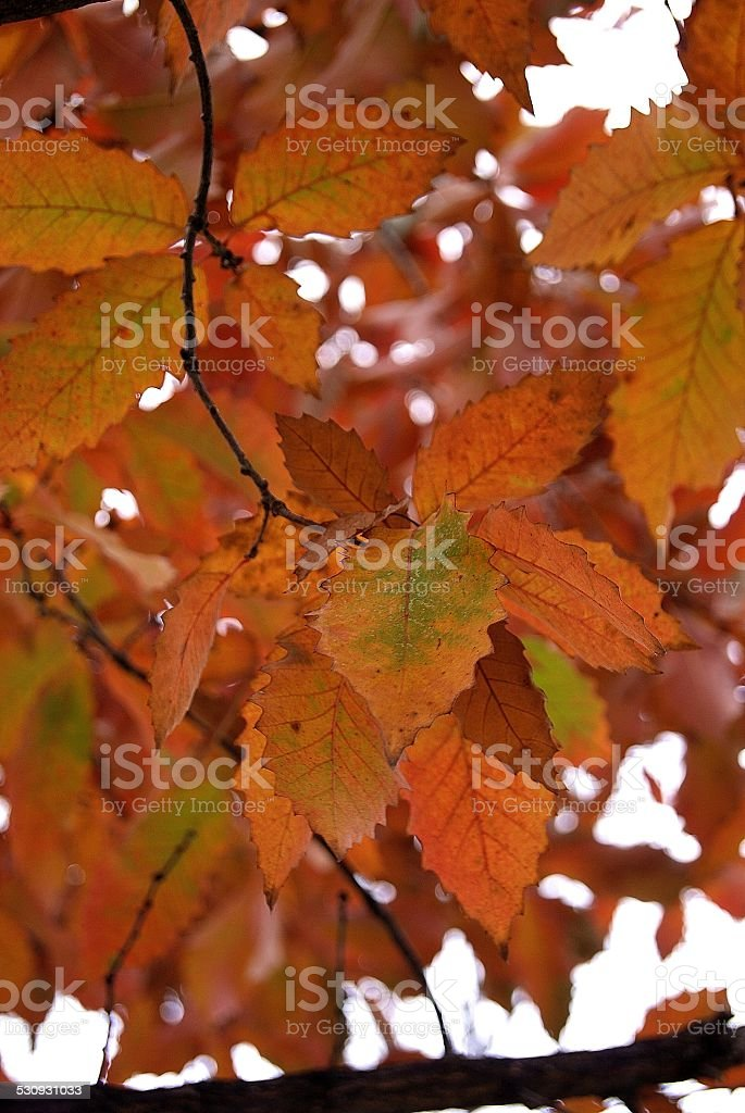 Array of Rigged Leaves royalty-free stock photo