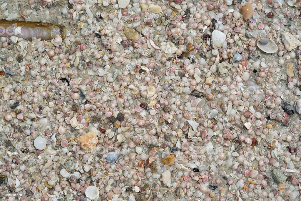 Array of seashells on the beach stock photo