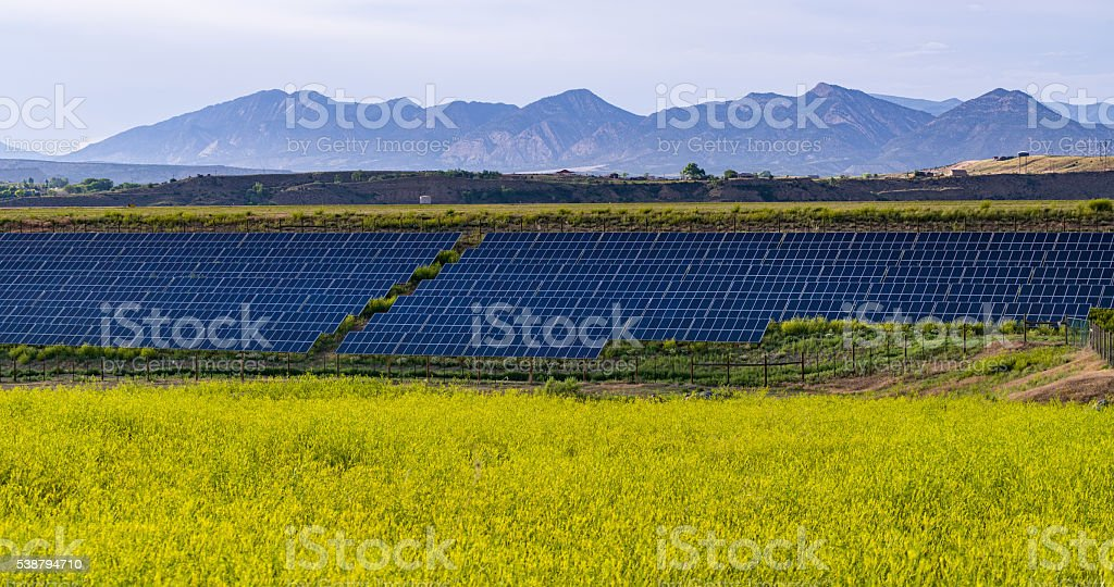 Array of Solar Panels and Yellow Flowers stock photo